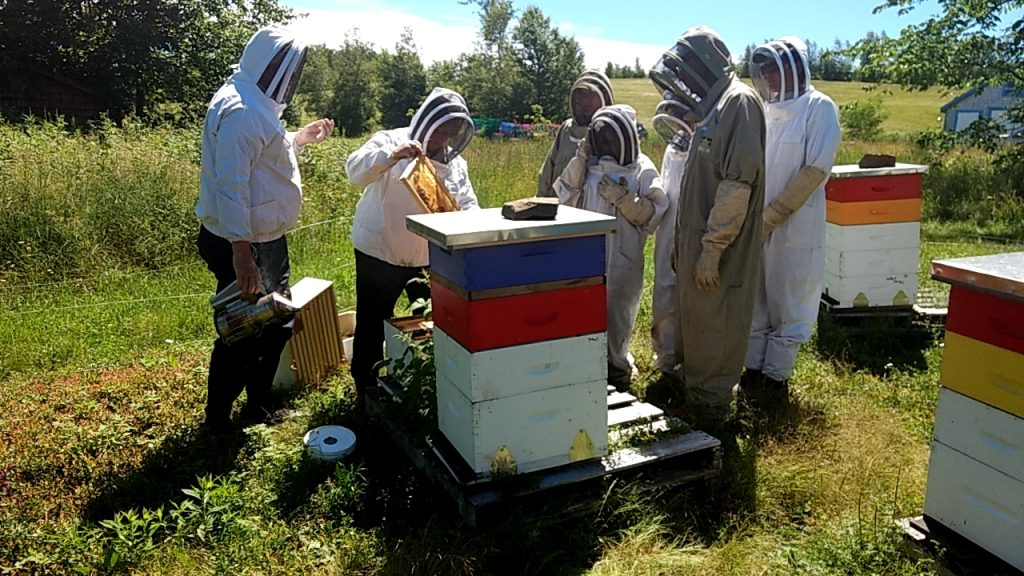 McKay Blueberry Bees